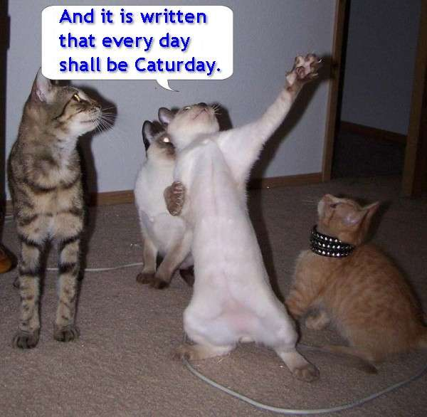 Name:  The_Great_Prophecy_of_Caturday.jpg Views: 71 Size:  36.1 KB