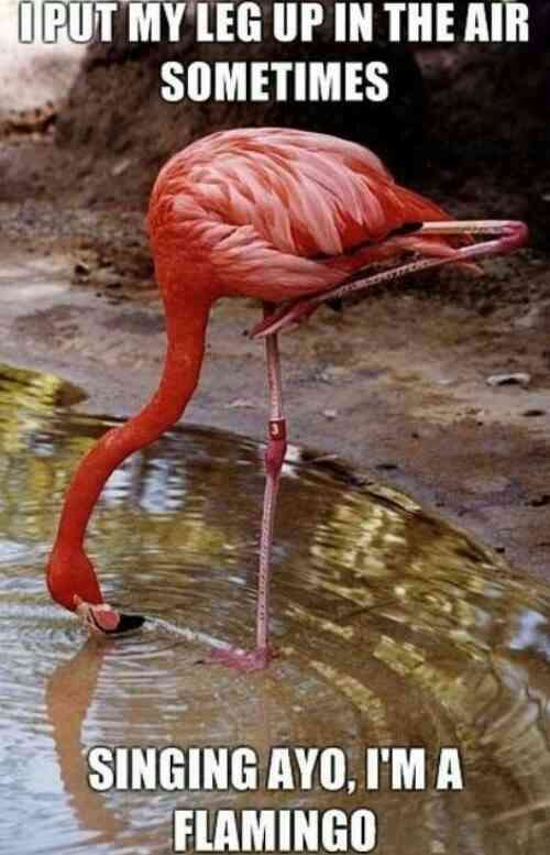 Name:  wpid-flamingo-i-put-my-leg-up-in-the-air-sometimes.jpg Views: 82 Size:  39.9 KB