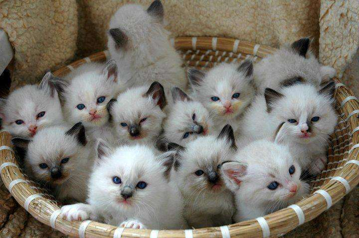 Name:  Basket-Of-Cats.jpg