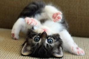 Name:  cute-cats-photo-2-300x200.jpg Views: 1424 Size:  17.1 KB