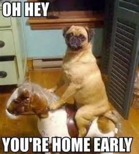 Name:  Funny+dog+memes+3.jpg Views: 7732 Size:  17.4 KB