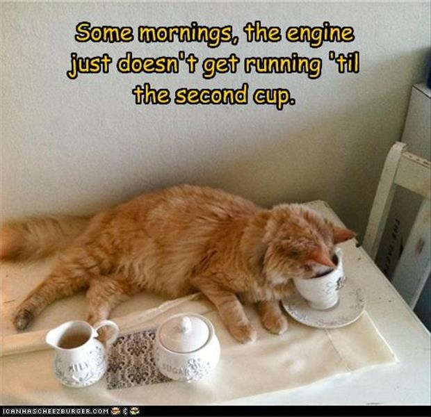 Name:  funny-coffee-in-the-morning-pictures.jpg Views: 83 Size:  54.8 KB