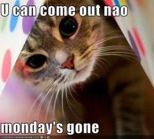 Name:  lol_cat_-_tuesday.jpg Views: 58 Size:  11.8 KB