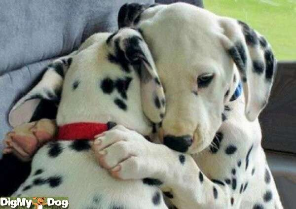 Name:  -dogs-1341271271.jpg Views: 97 Size:  27.0 KB
