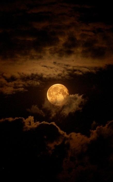 Name:  moonlit night.jpg Views: 76 Size:  44.6 KB