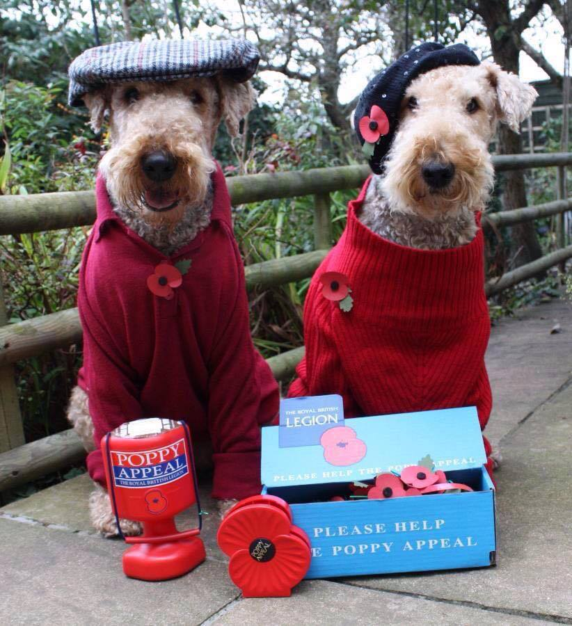 Name:  Poppy Appeal Dogs..jpg