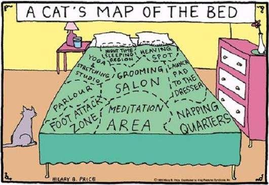 Name:  Cat Map.jpg Views: 92 Size:  38.2 KB