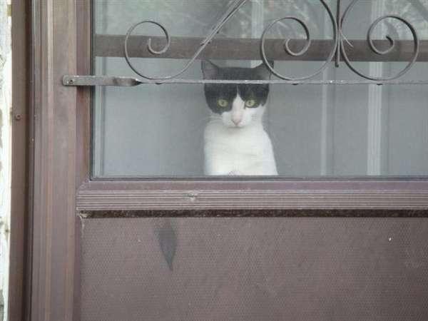 Name:  116817-club-q-q107-loyalty-club-southern-only-v4-cat-today.jpg Views: 46 Size:  20.4 KB