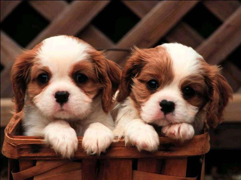 Name:  cute-puppies-puppies-and-more-31104113-1024-768.jpg Views: 456 Size:  65.3 KB
