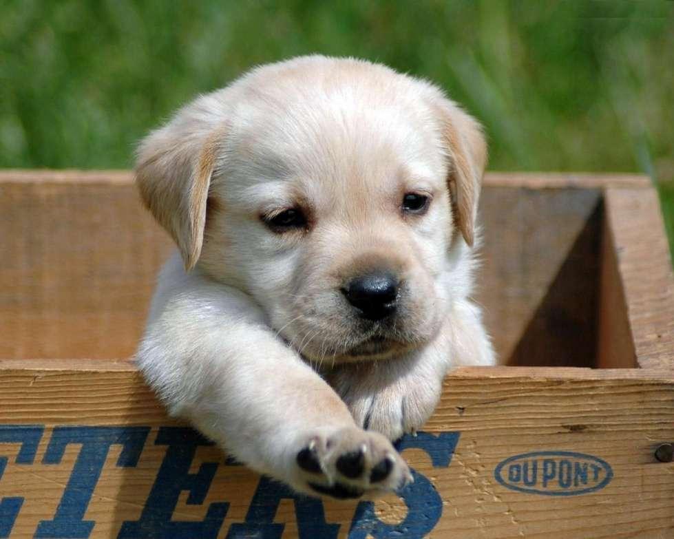 Name:  Puppies-puppies-29017071-1280-1024.jpg Views: 496 Size:  59.5 KB