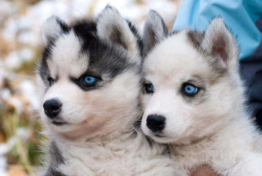 Name:  Cute+Couple+Puppies.jpg Views: 2349 Size:  60.2 KB