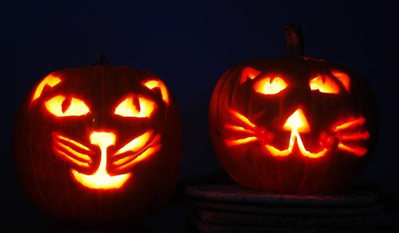 Name:  Kitty Pumpkins.jpg Views: 77 Size:  34.6 KB