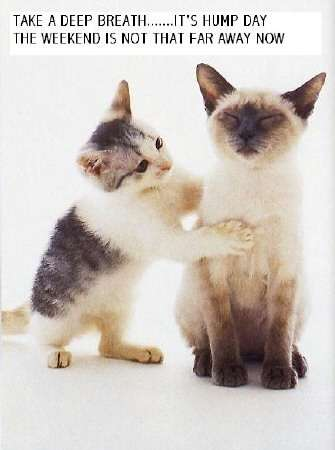 Name:  2 cats hump day.jpg Views: 44 Size:  15.3 KB