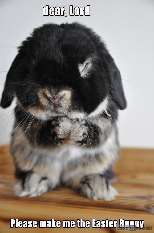Name:  make me an easter bunny.jpg Views: 34 Size:  41.3 KB