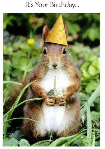 happy birthday veevee squirrel clipart with no background squirrel clip art black