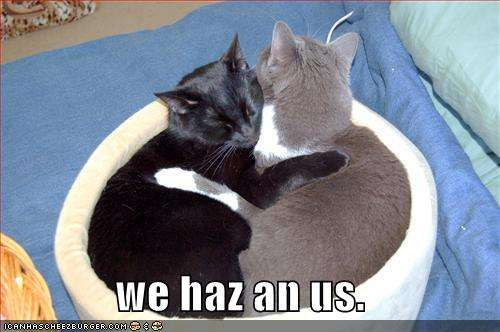 Name:  funny-pictures-hugging-cats-basket1.jpg Views: 369 Size:  25.1 KB