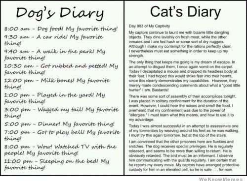 Name:  dogs-vs-cats-diary.jpg