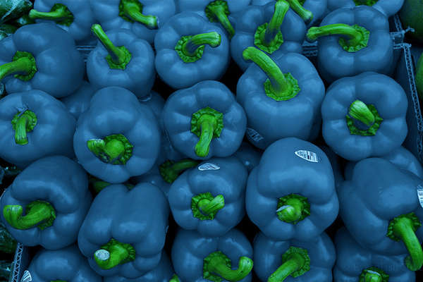 Name:  blue peppers.jpg Views: 299 Size:  39.8 KB