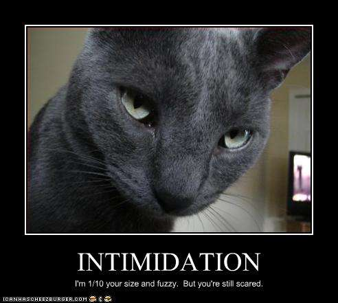 Name Funny Pictures Cat Intimidating Views Size