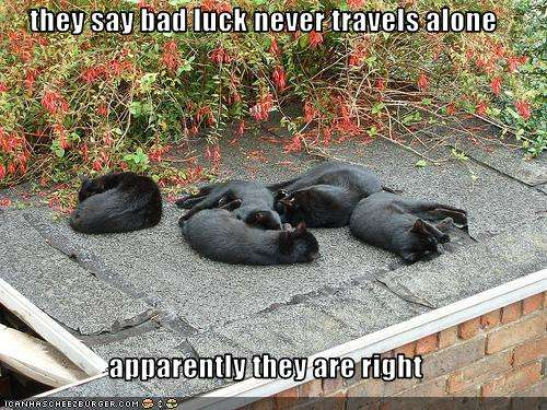 Name:  funny-pictures-black-cats-sleep-together.jpg Views: 98 Size:  63.4 KB