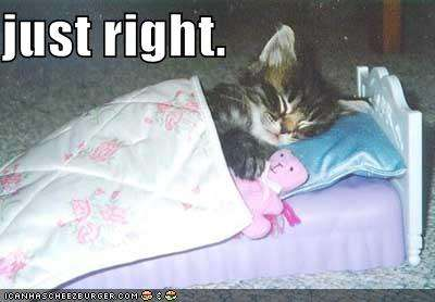 Name:  funny-pictures-kitten-sleeps-tiny-bed.jpg
