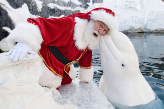Name:  funny-santa-animal-cute.jpg
