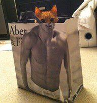 Name:  cat in bag.jpg Views: 120 Size:  9.2 KB