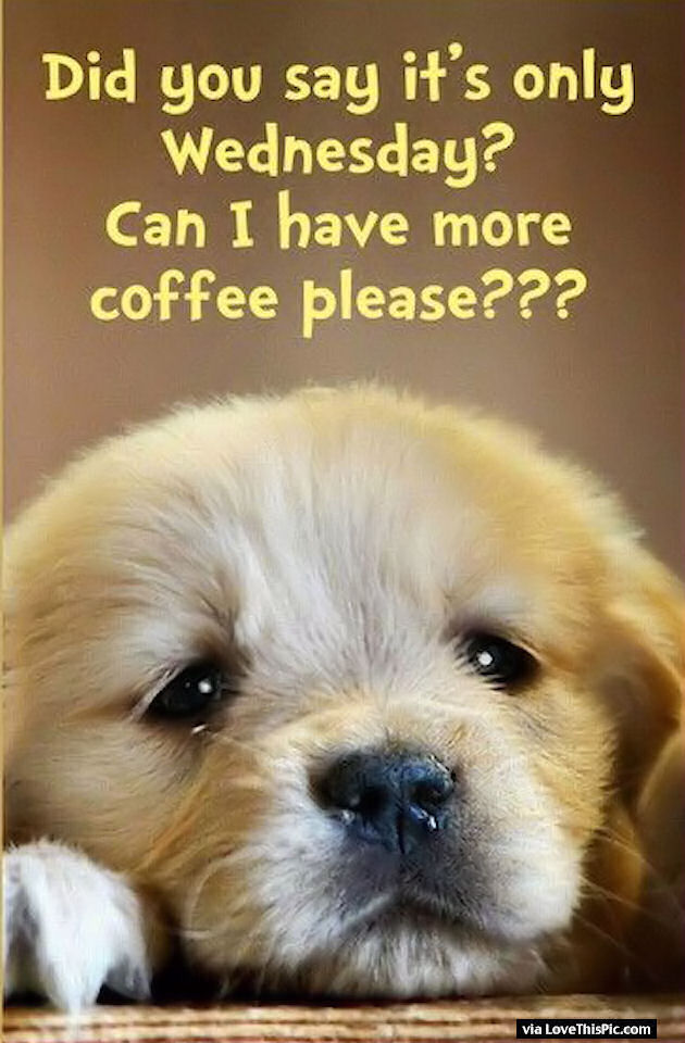 Name:  MORE COFFEE PLS.jpg Views: 34 Size:  93.4 KB
