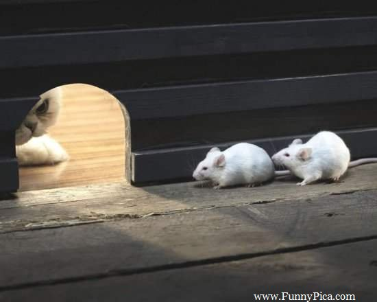 Name:  Funny-and-Cute-Mouses-Funny-Mouse-Picture-064-FunnyPica.com_.jpg Views: 51 Size:  21.2 KB