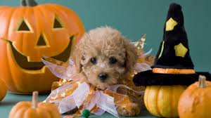 Name:  halloween puppy.jpeg