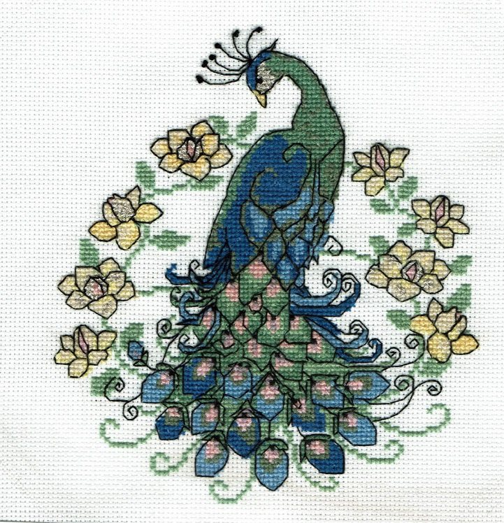 Name:  peacock.jpg