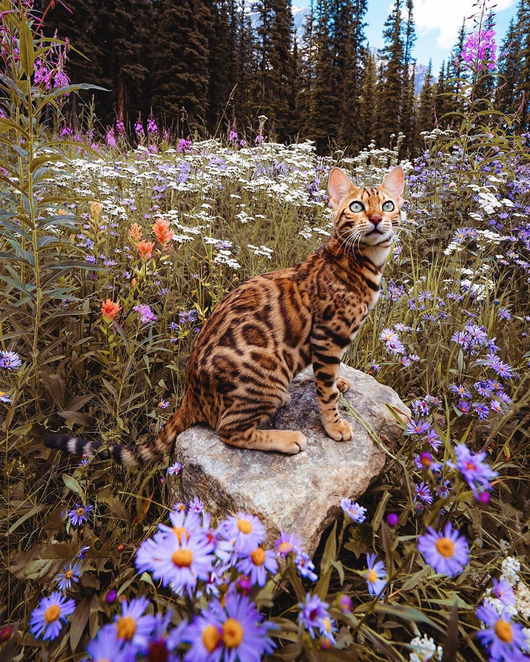 Name:  a_little_wildflower.jpg Views: 72 Size:  445.6 KB