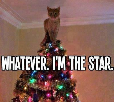 Name:  cat's the star.jpg