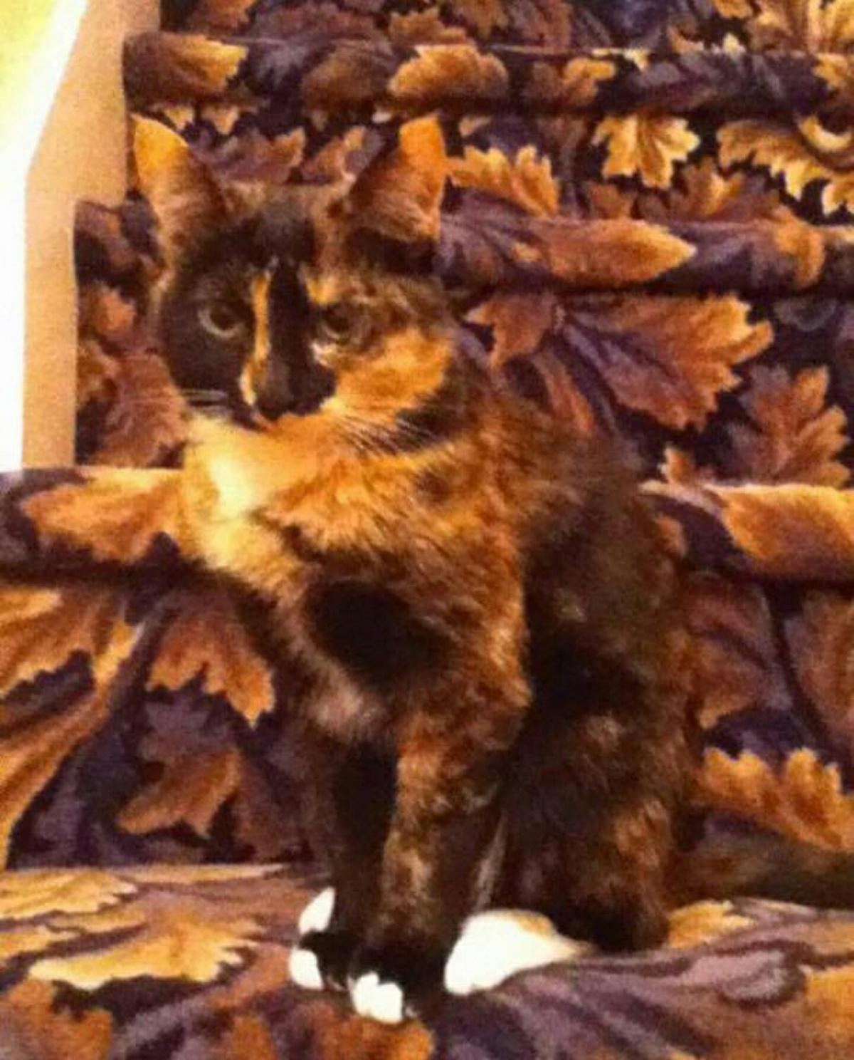 Name:  cat_camouflaged_agai.jpg Views: 103 Size:  406.7 KB