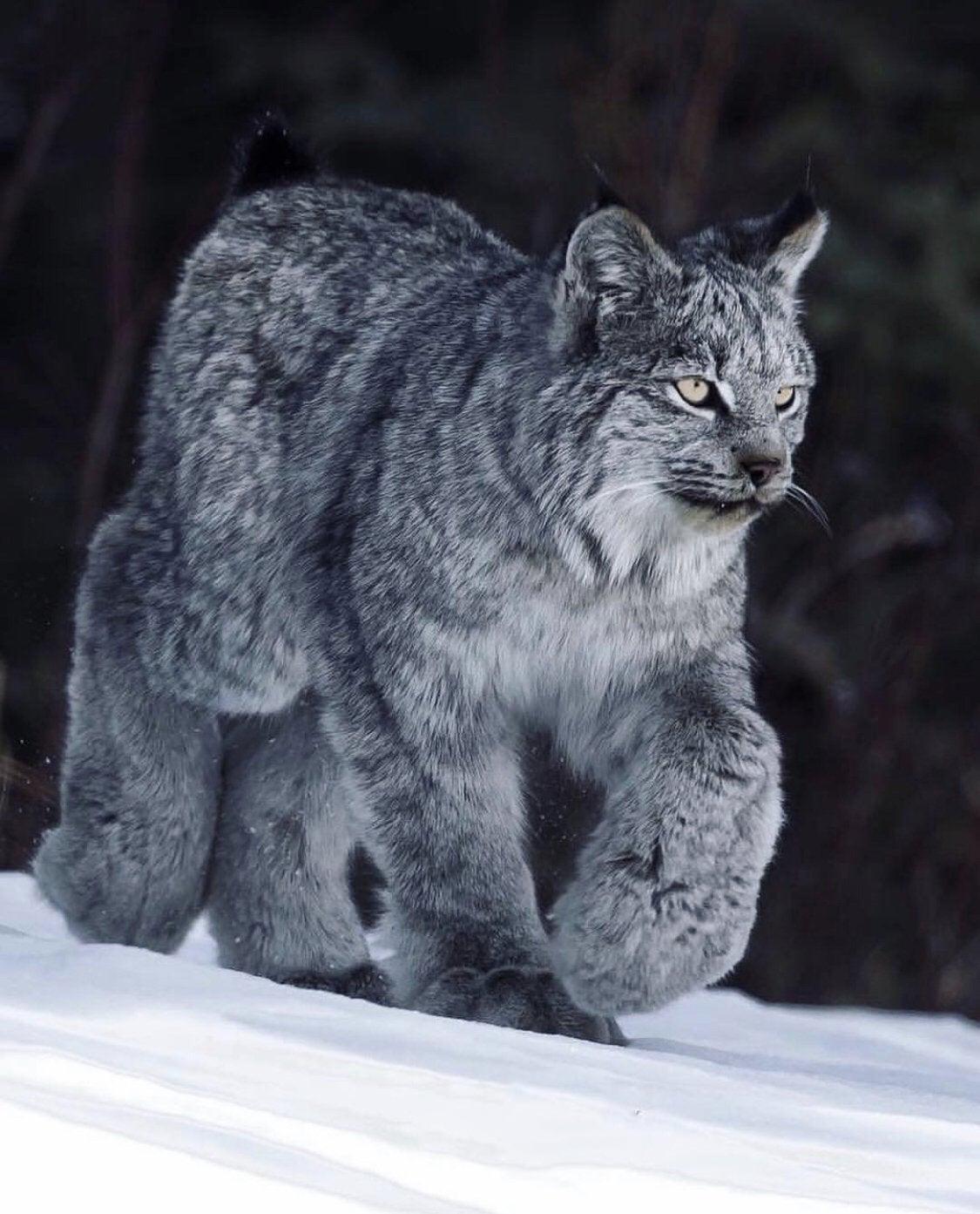 Name:  10_cat_90_fluff..._h.jpg Views: 43 Size:  175.4 KB