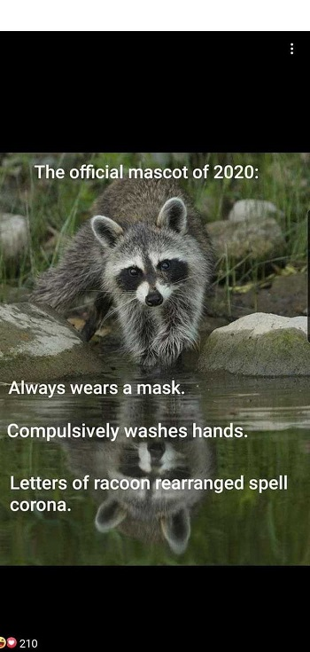 Name:  racoon.jpg