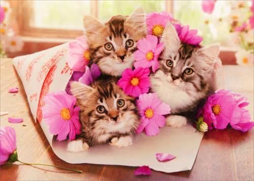 Name:  cats flowers.jpg Views: 42 Size:  26.1 KB