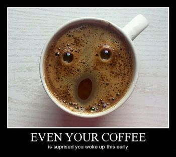 Name:  coffee face.jpg
