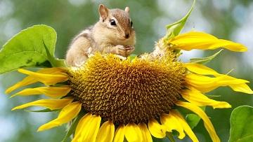 Name:  get-rid-of-chipmunks.jpg Views: 34 Size:  41.6 KB