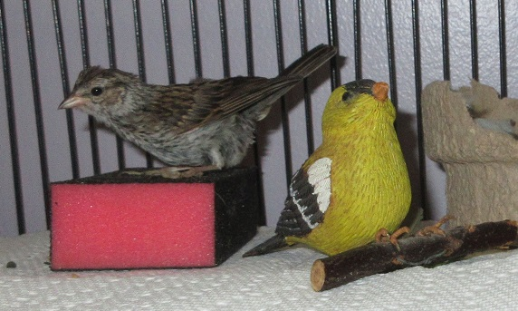 Name:  my american goldfinch friend.jpg Views: 80 Size:  105.1 KB