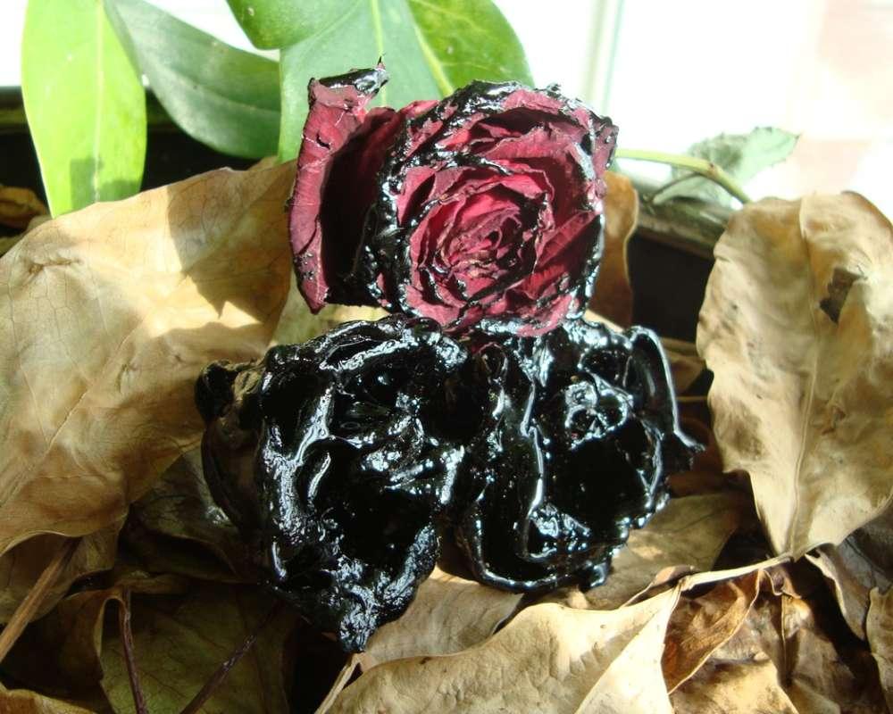 Name:  beauty-black-roses2.jpg Views: 755 Size:  106.6 KB