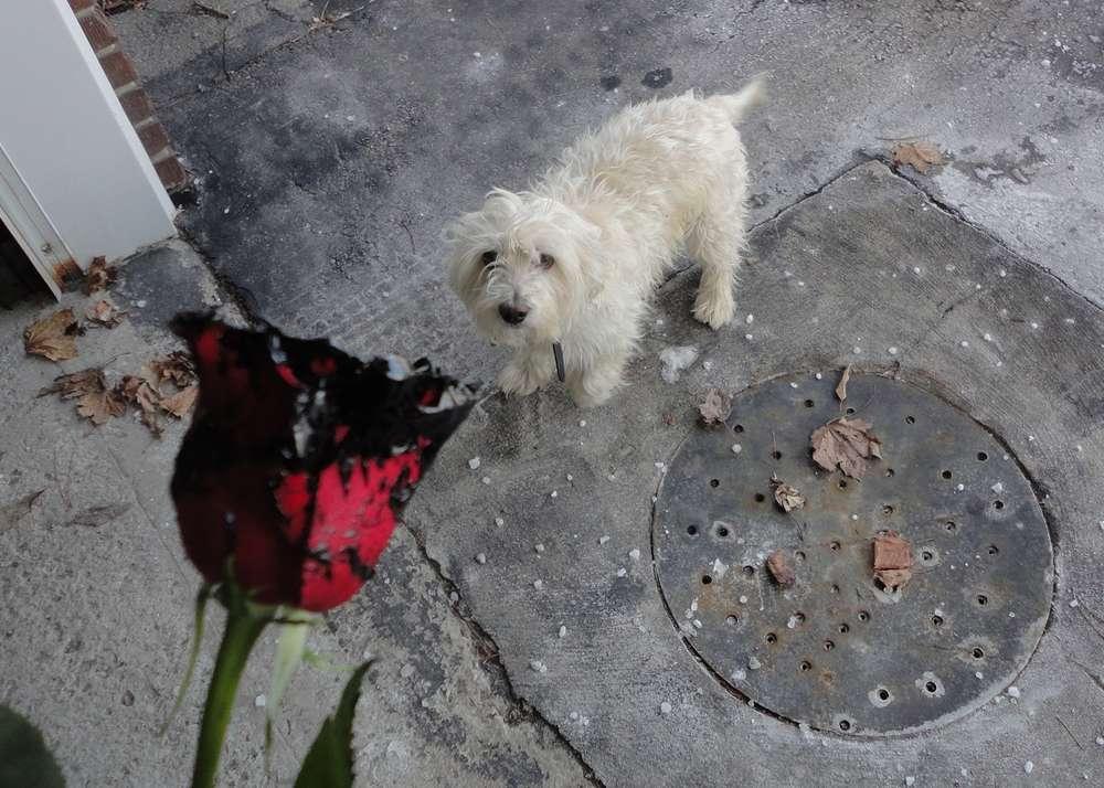 Name:  Dog-rose-waterproofing-basement.jpg Views: 485 Size:  112.2 KB