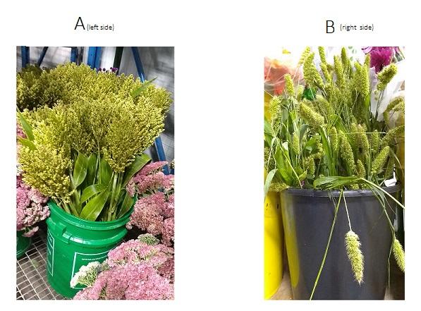 Name:  Floral Fillers.jpg Views: 57 Size:  112.9 KB