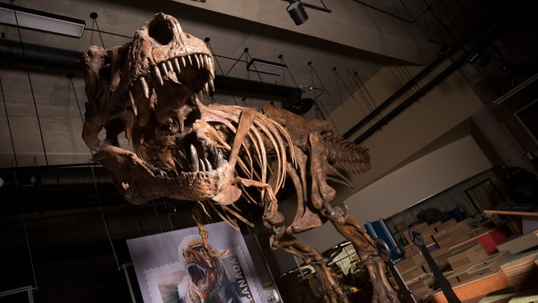 Name:  scotty-worlds-biggest-t-rex-found-in-sask.jpg