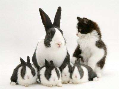 Name:  kitty-and-bunnies-easter-photo.jpg