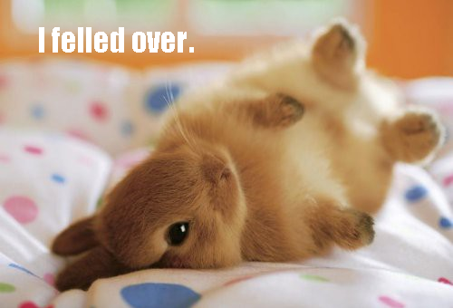 Name:  cute-bunny-fell-over.png
