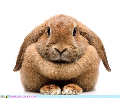 Name:  f7197_cute-animals-bunday-chin-rest.jpg Views: 128 Size:  41.5 KB