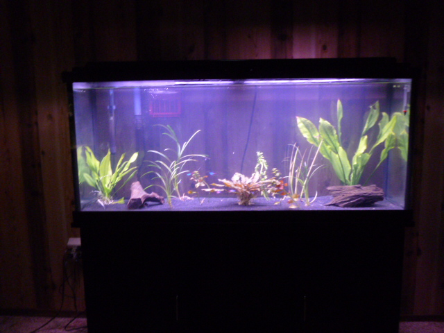 Fish tanks for sale wichita ks 150 gallon fish tank for 55 gallon fish tank for sale