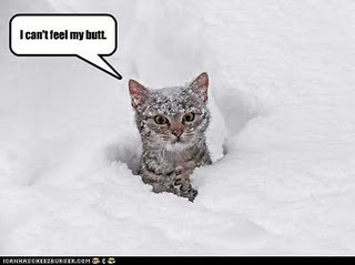 Name:  lol_cat_with_frozen_butt.jpg Views: 210 Size:  12.9 KB
