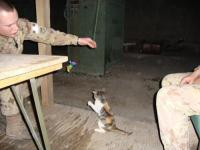 Private Jody is a cat in Afganistan. Her owner wants her to come to Canada to live. Please donate on Facebook.